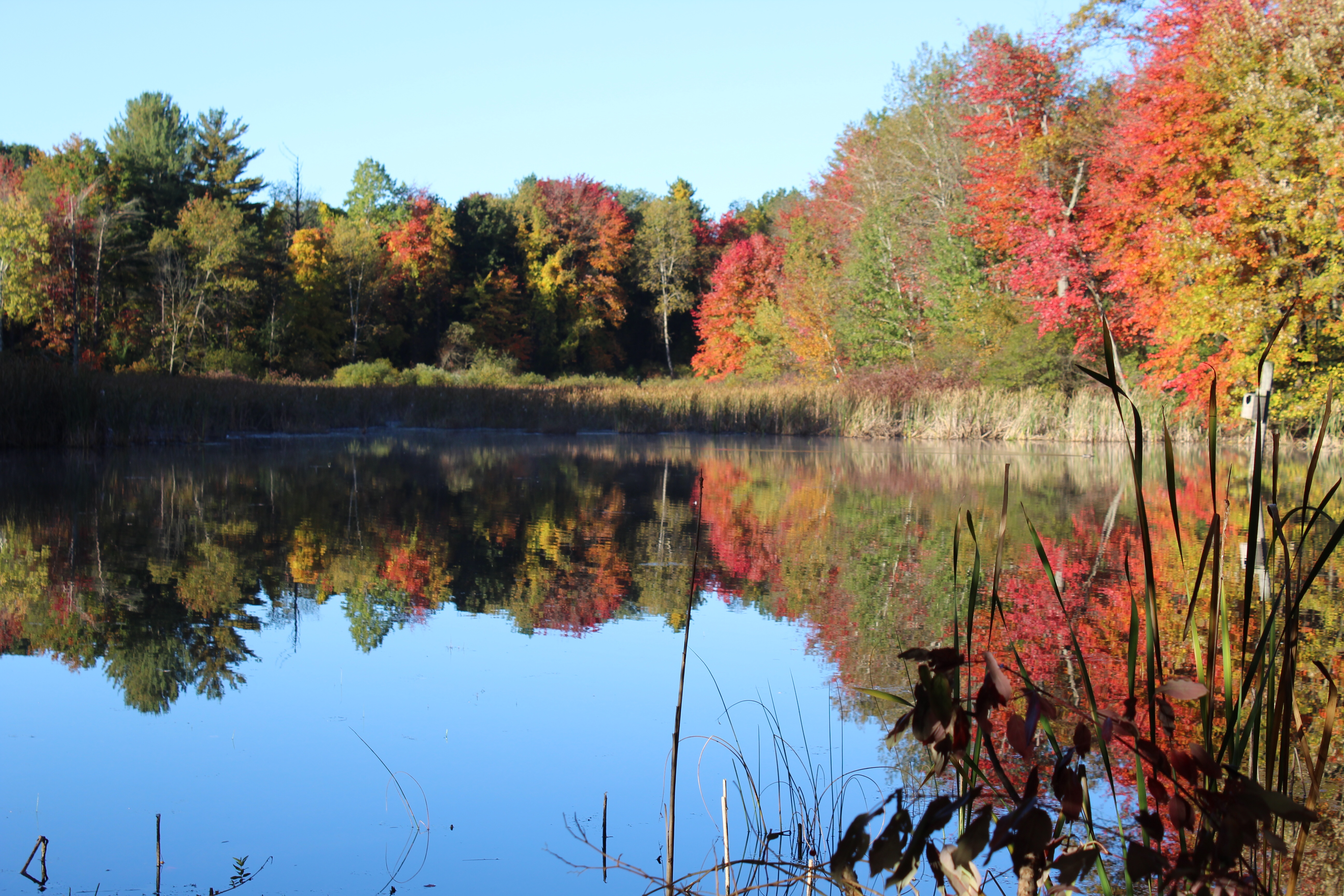 Blue lake in a marsh surrounded by fall trees and a brilliant blue sky, which are reflected in the lake.